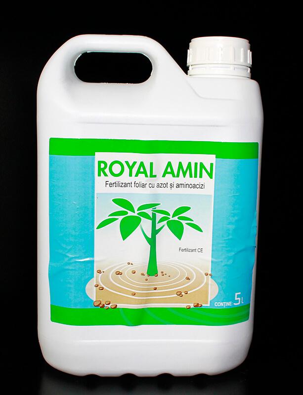 Royal Amin